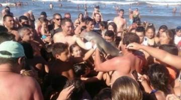 delfin-cusme