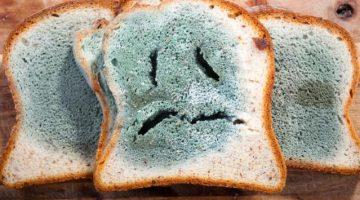 ¿Cómo afecta a nuestro cuerpo haber comido algún alimento con moho?
