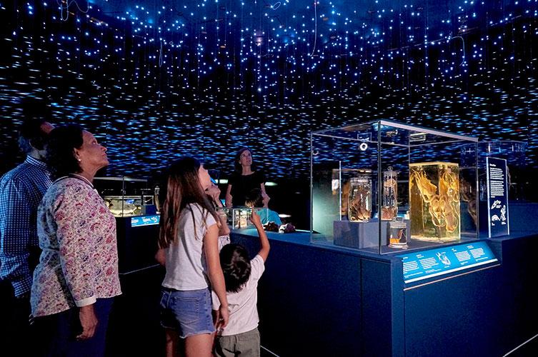 Museo de Historia Natural de Londres se adentra a la oscuridad